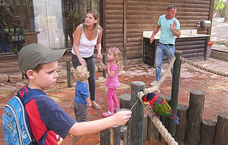 5 кормление попугаев