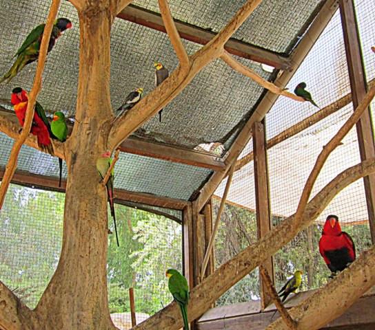 6 попугаи
