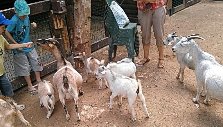 10 козлы