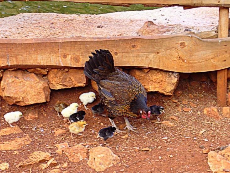 4 курица