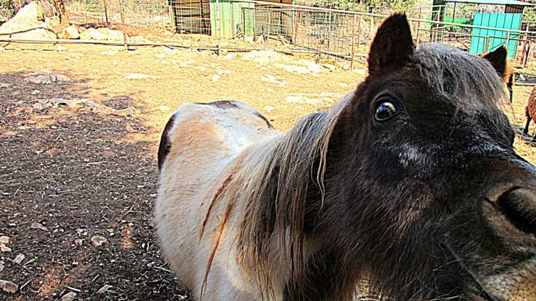 6 лошадь