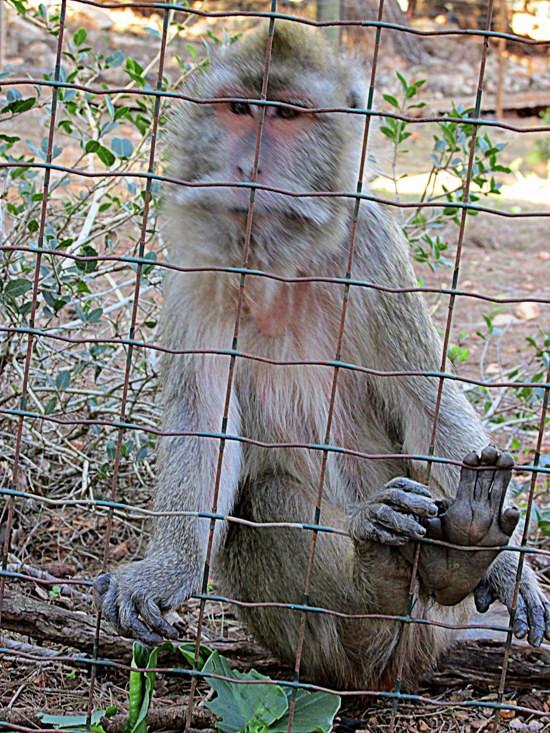 10 обезьян