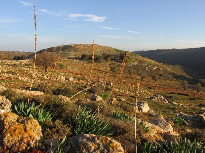 3 холм Йодфат