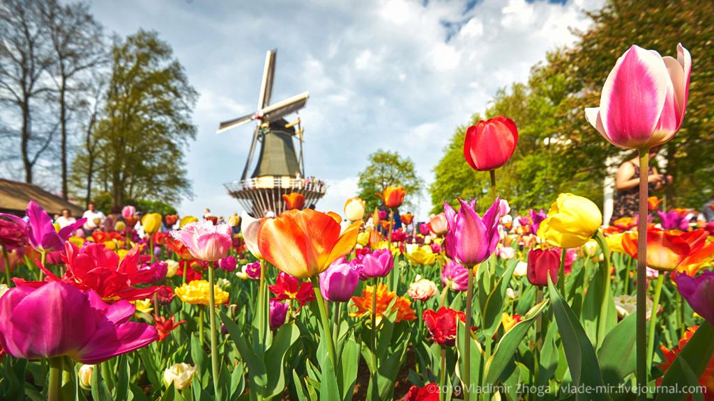 Море цветоф в голландском парке Кёкенхоф