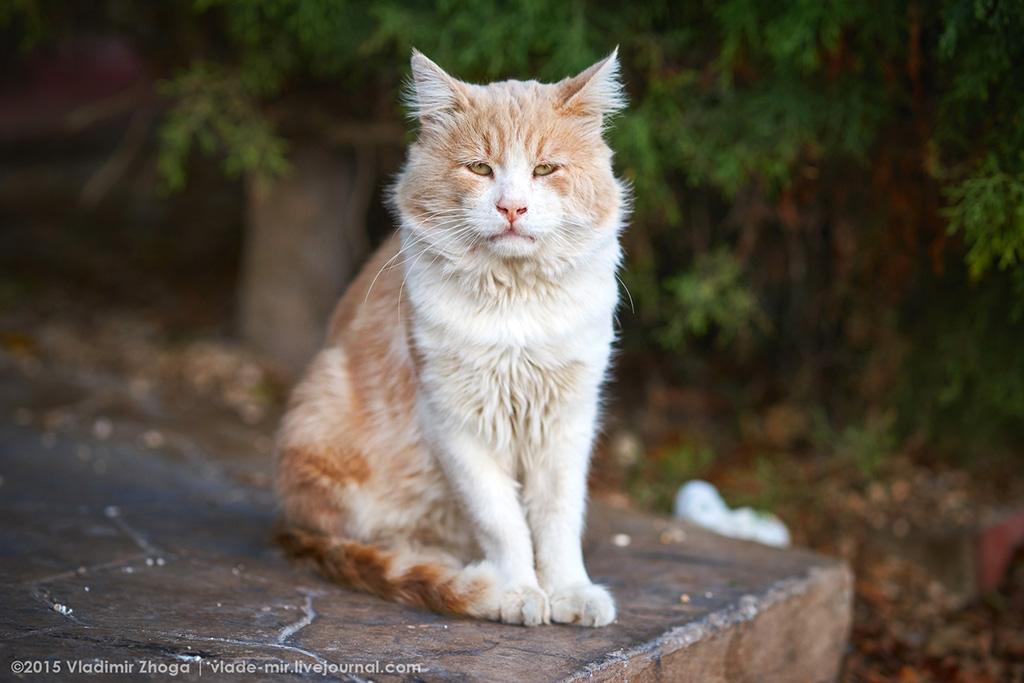 Кипрские котейки DSC03790.jpg