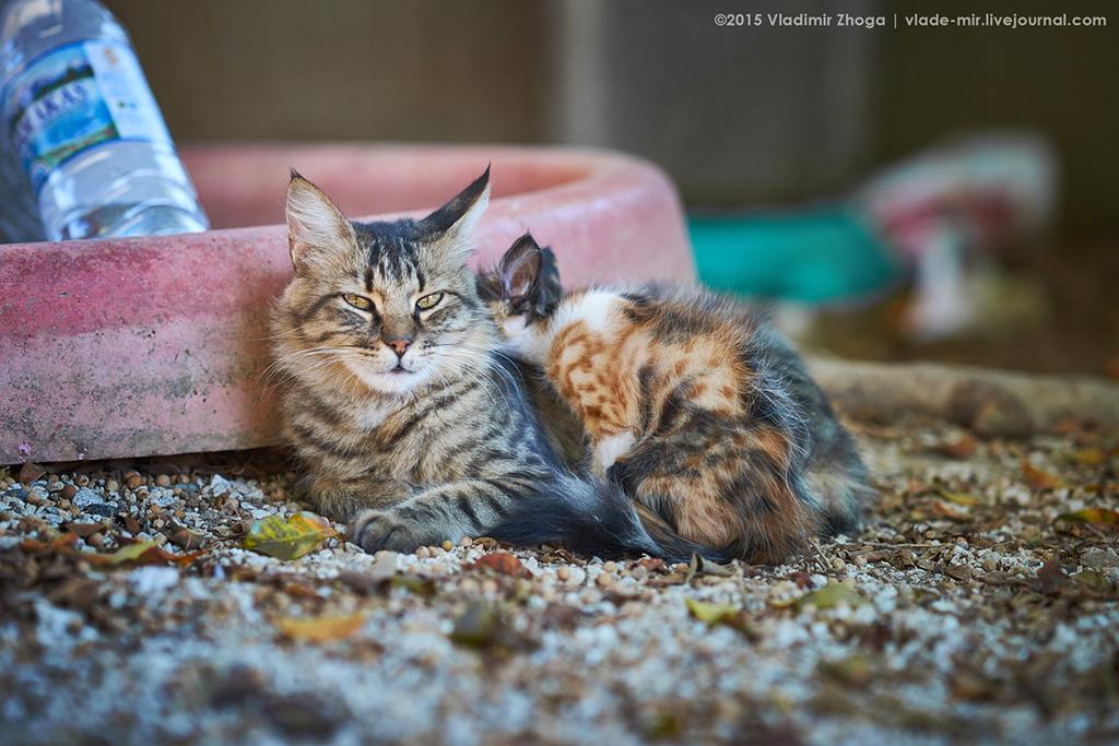 Кипрские котейки DSC03756.jpg