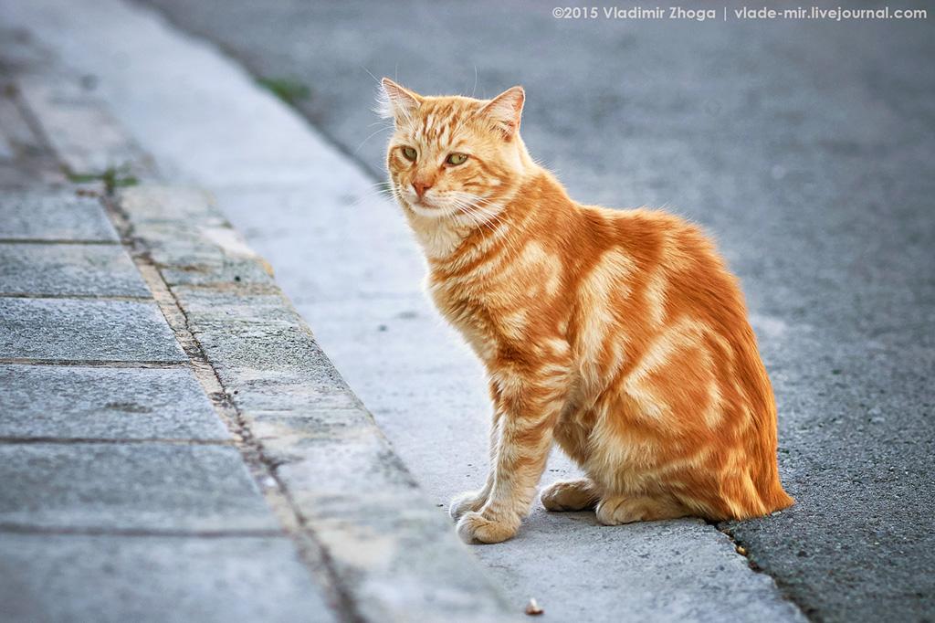 Кипрские котейки DSC03757.jpg