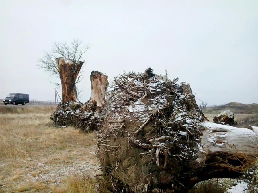 Сад корней в Токмаке (5)