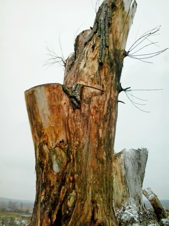 Сад корней в Токмаке (6)