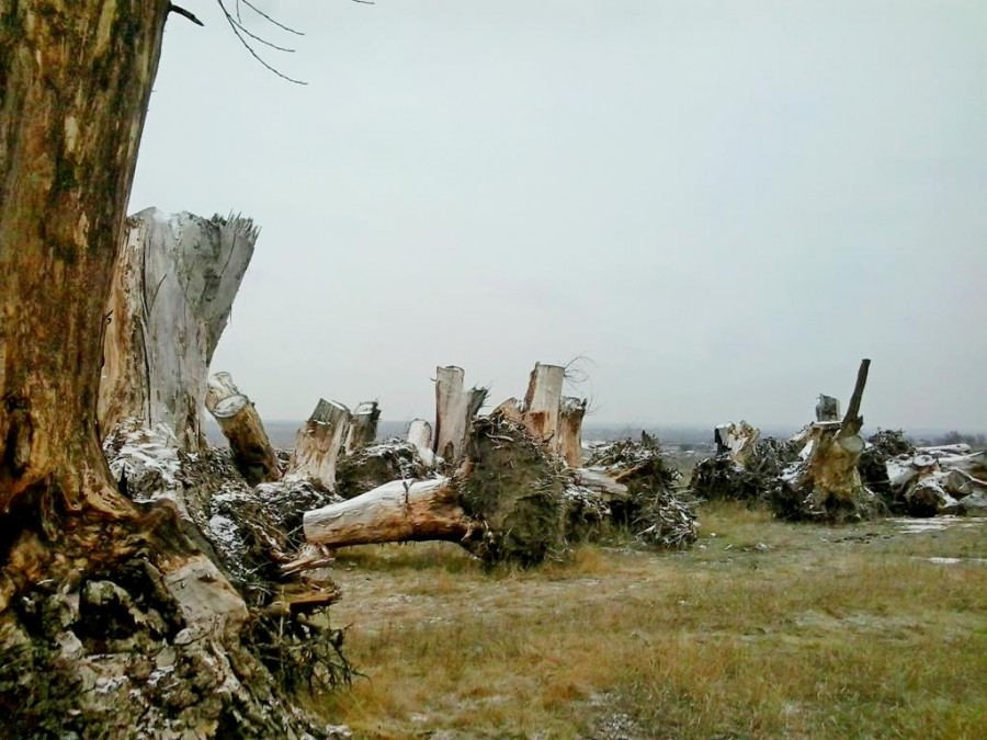 Сад корней в Токмаке (7)