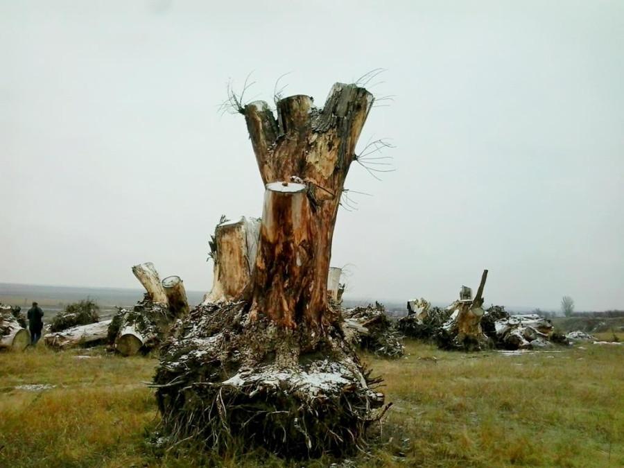 Сад корней в Токмаке (8)