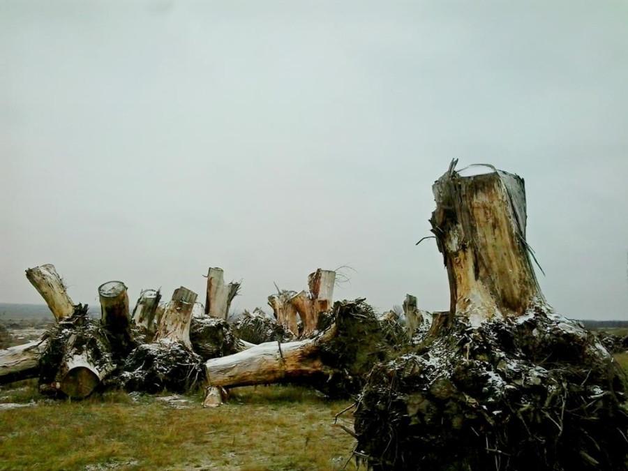Сад корней в Токмаке (9)
