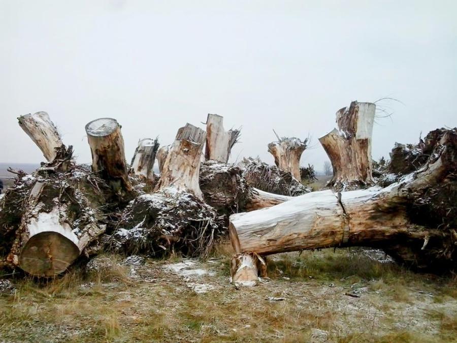 Сад корней в Токмаке (10)
