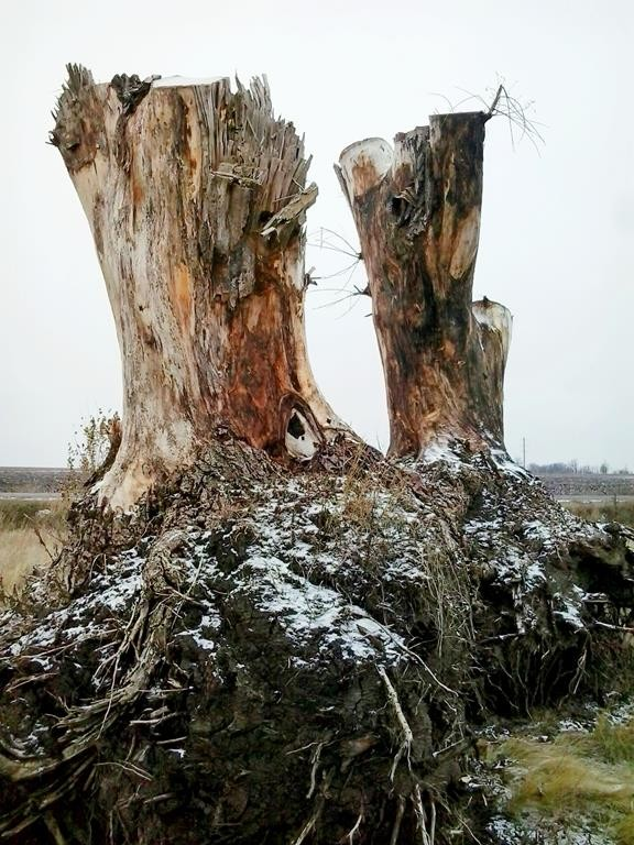 Сад корней в Токмаке (11)