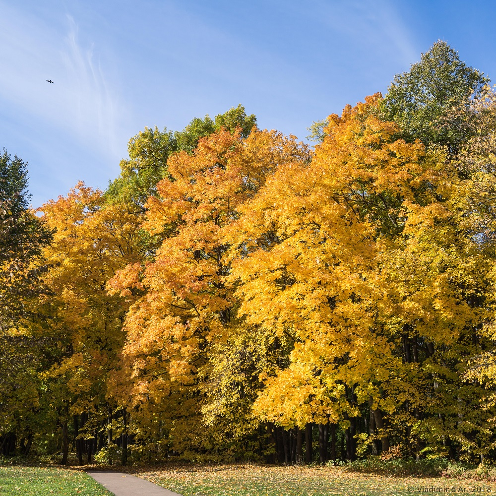 Вспомним Золотую осень