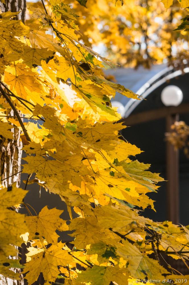 Царицыно - золотая осень 2019 - 003.jpg