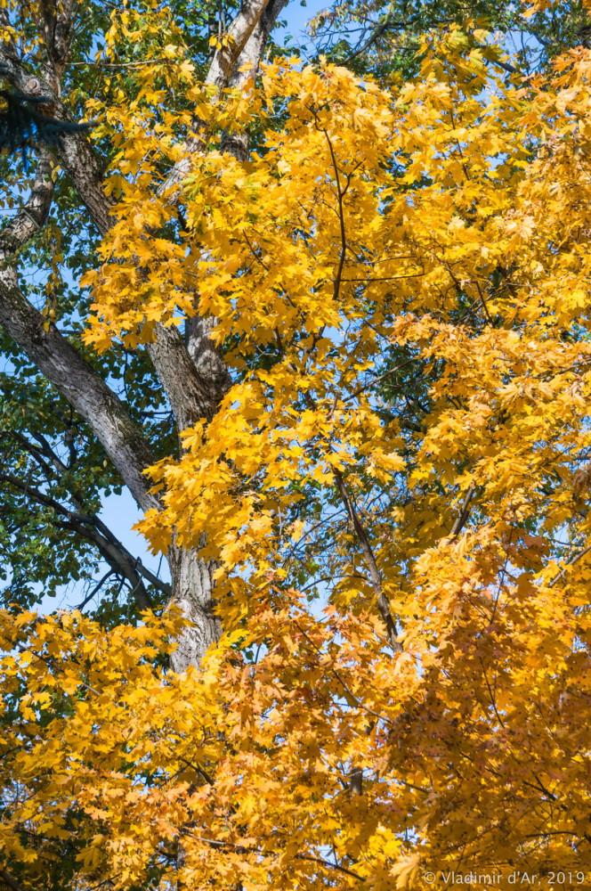 Царицыно - золотая осень 2019 - 004.jpg