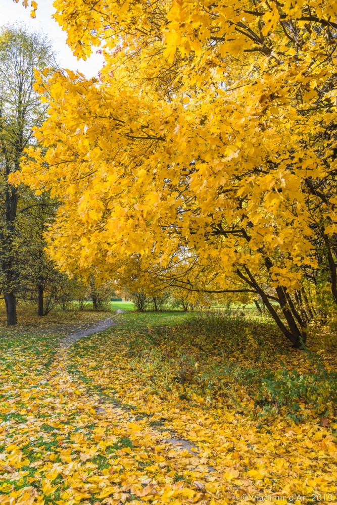 Царицыно - золотая осень 2019 - 006.jpg