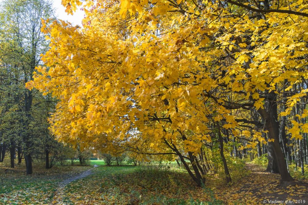 Царицыно - золотая осень 2019 - 007.jpg