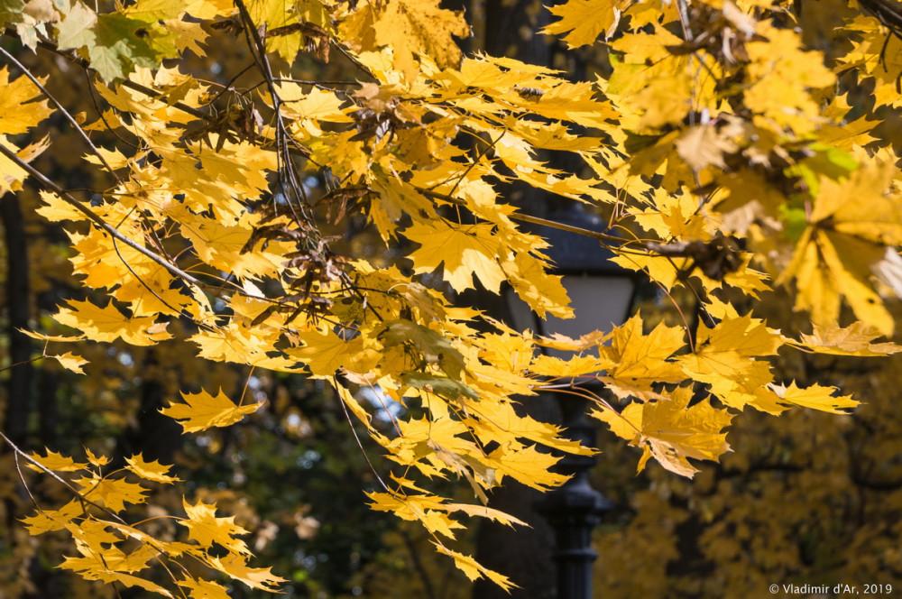 Царицыно - золотая осень 2019 - 009.jpg
