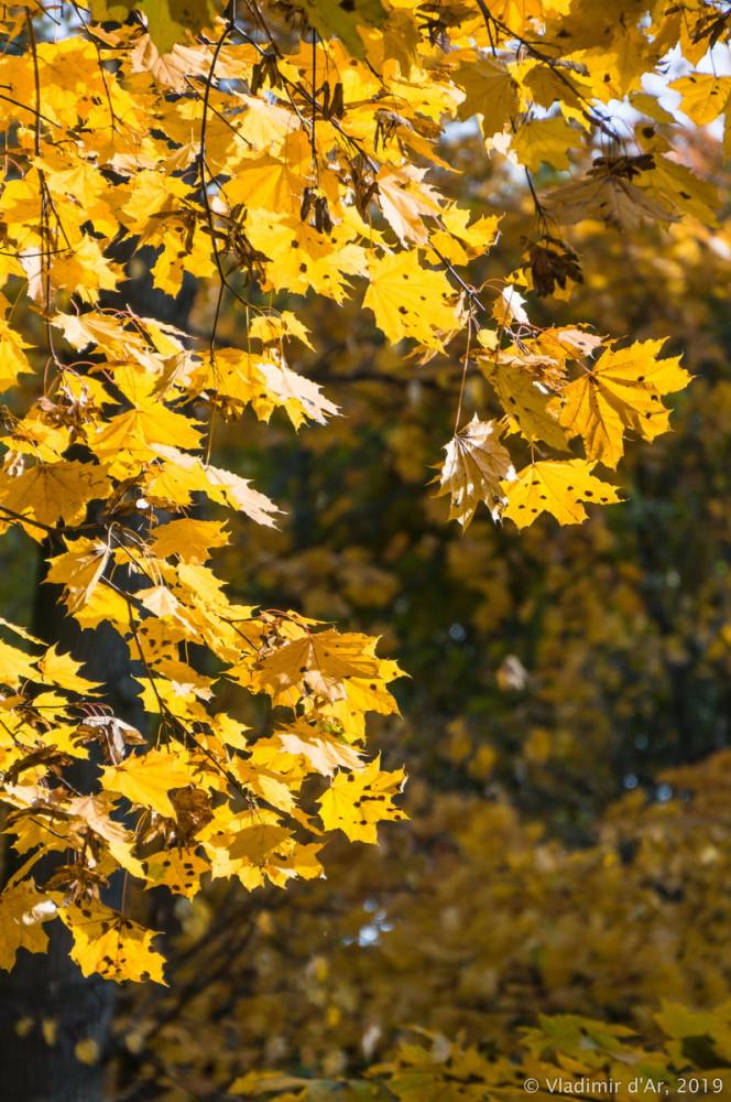 Царицыно - золотая осень 2019 - 010.jpg