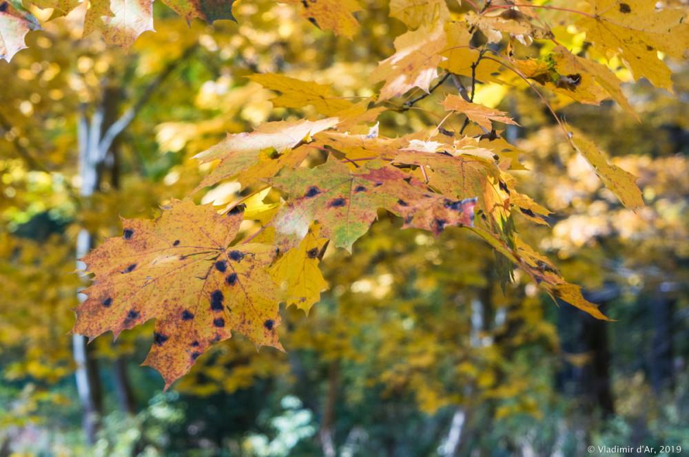 Царицыно - золотая осень 2019 - 012.jpg