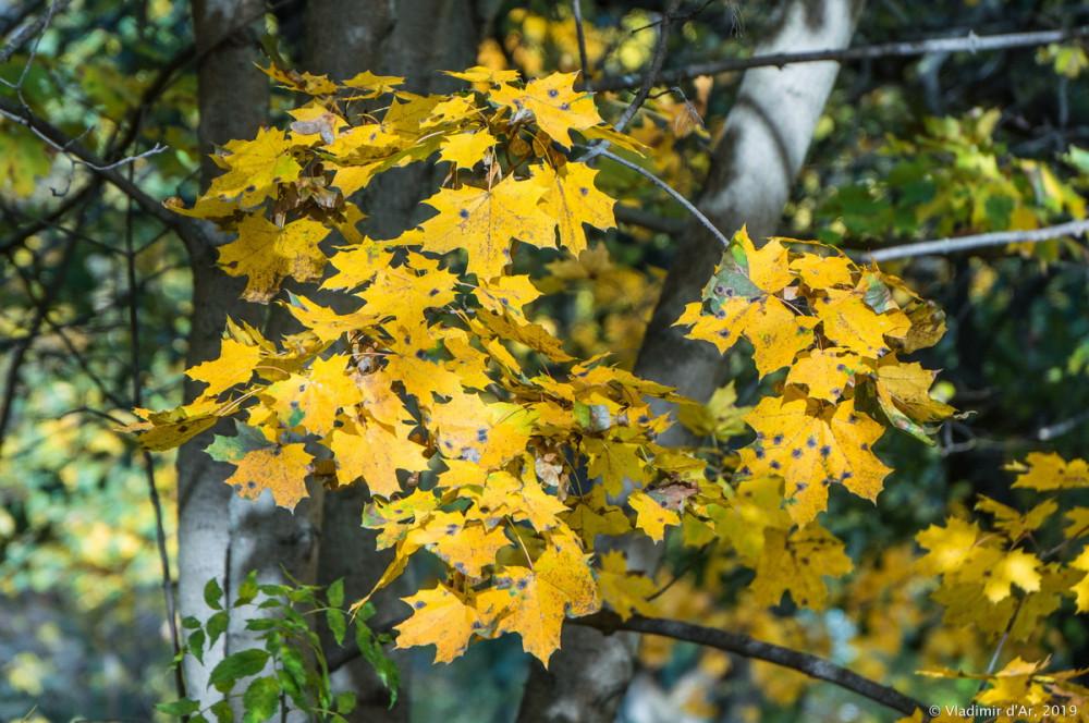 Царицыно - золотая осень 2019 - 013.jpg
