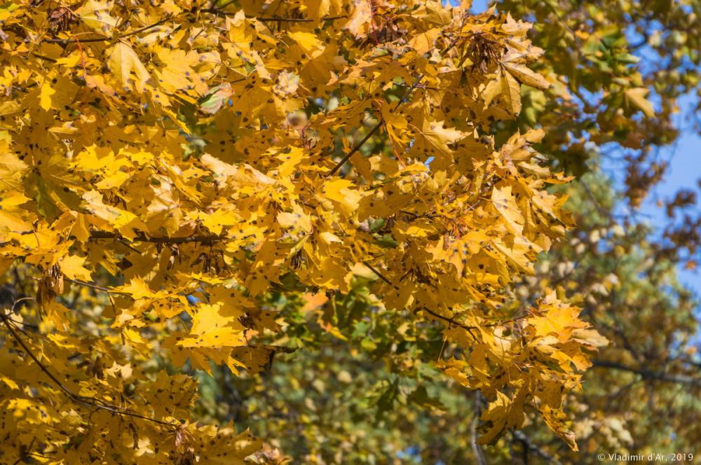Царицыно - золотая осень 2019 - 015.jpg
