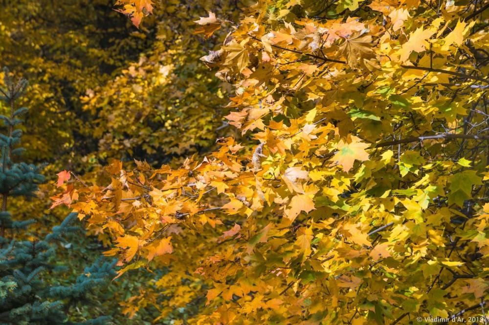 Царицыно - золотая осень 2019 - 016.jpg