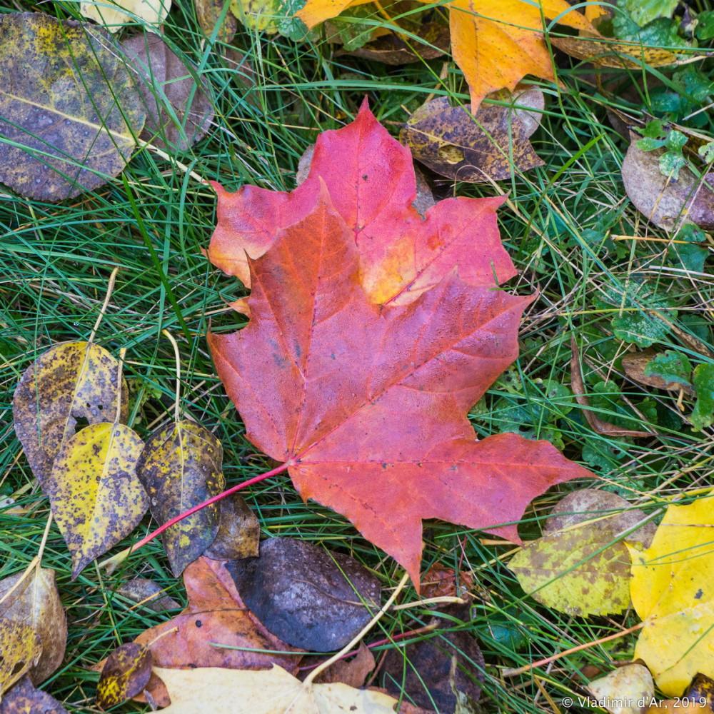 Царицыно - золотая осень 2019 - 017.jpg