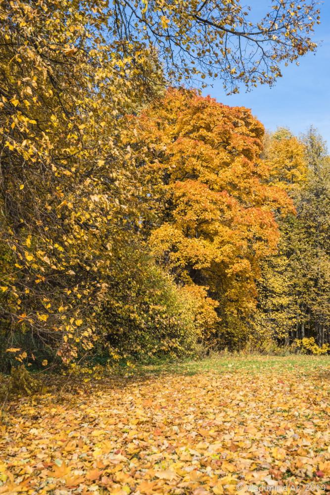 Царицыно - золотая осень 2019 - 020.jpg