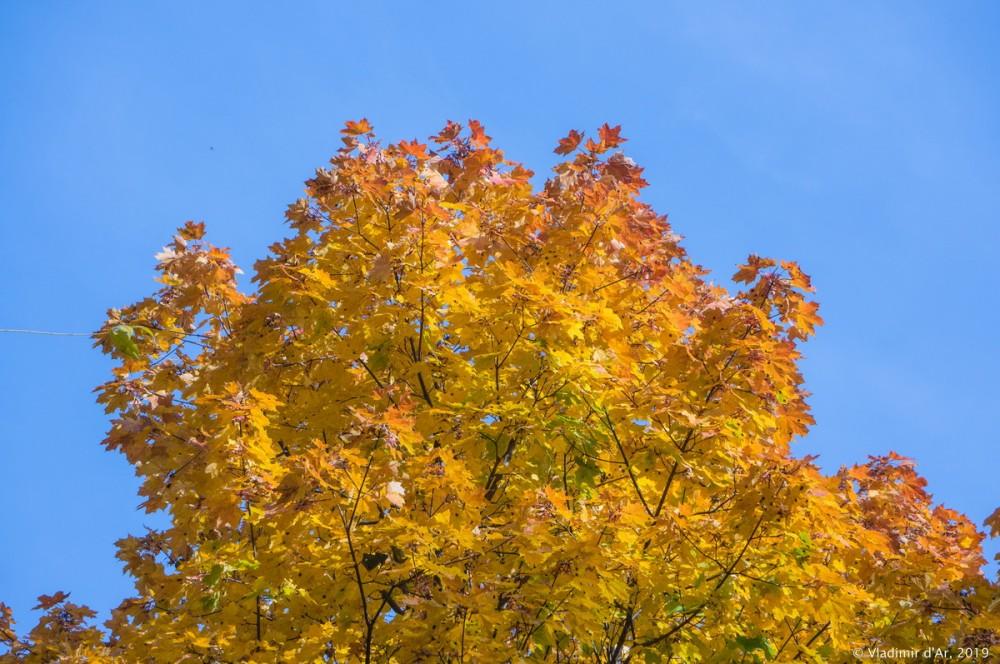 Царицыно - золотая осень 2019 - 021.jpg