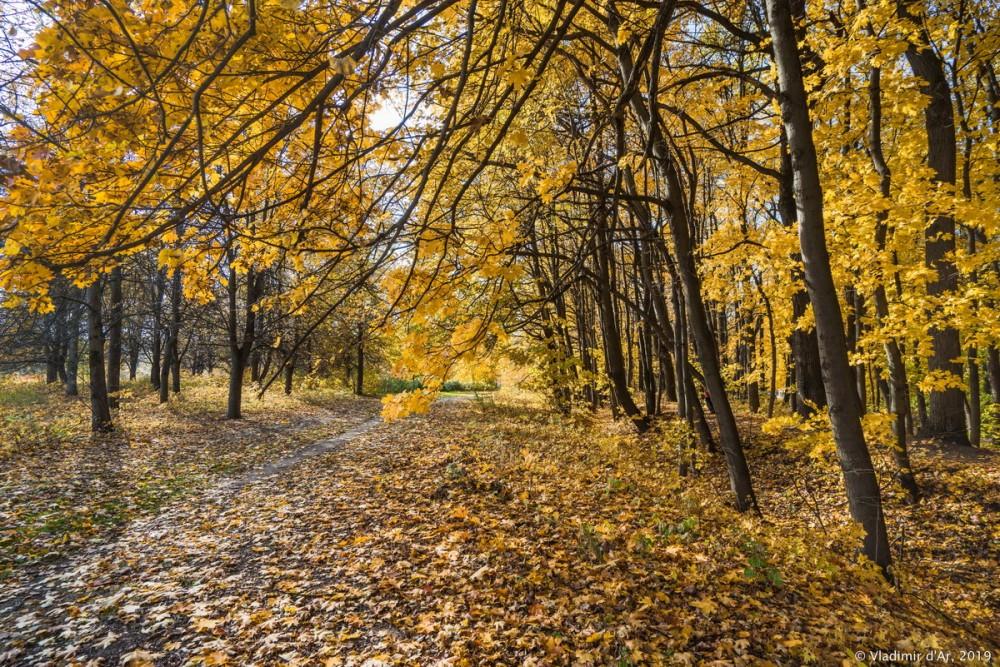 Царицыно - золотая осень 2019 - 023.jpg