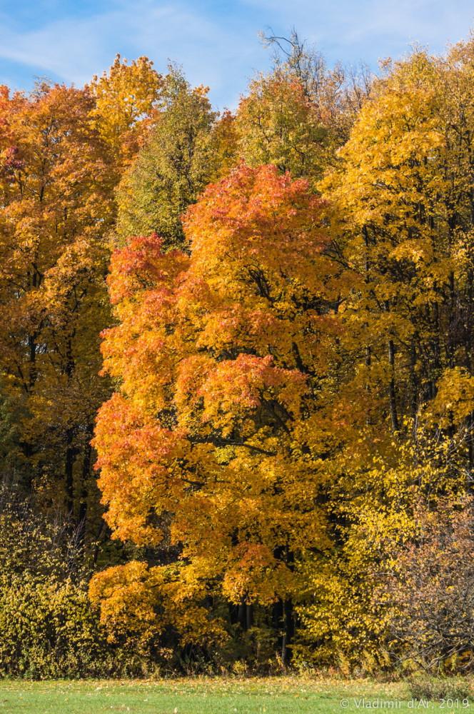 Царицыно - золотая осень 2019 - 030.jpg