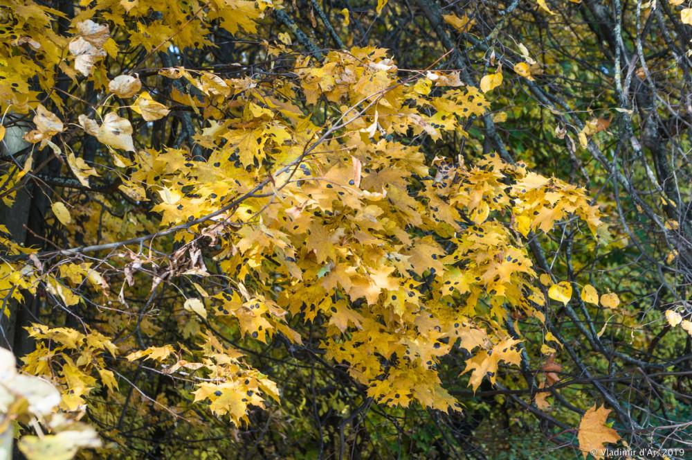 Царицыно - золотая осень 2019 - 034.jpg