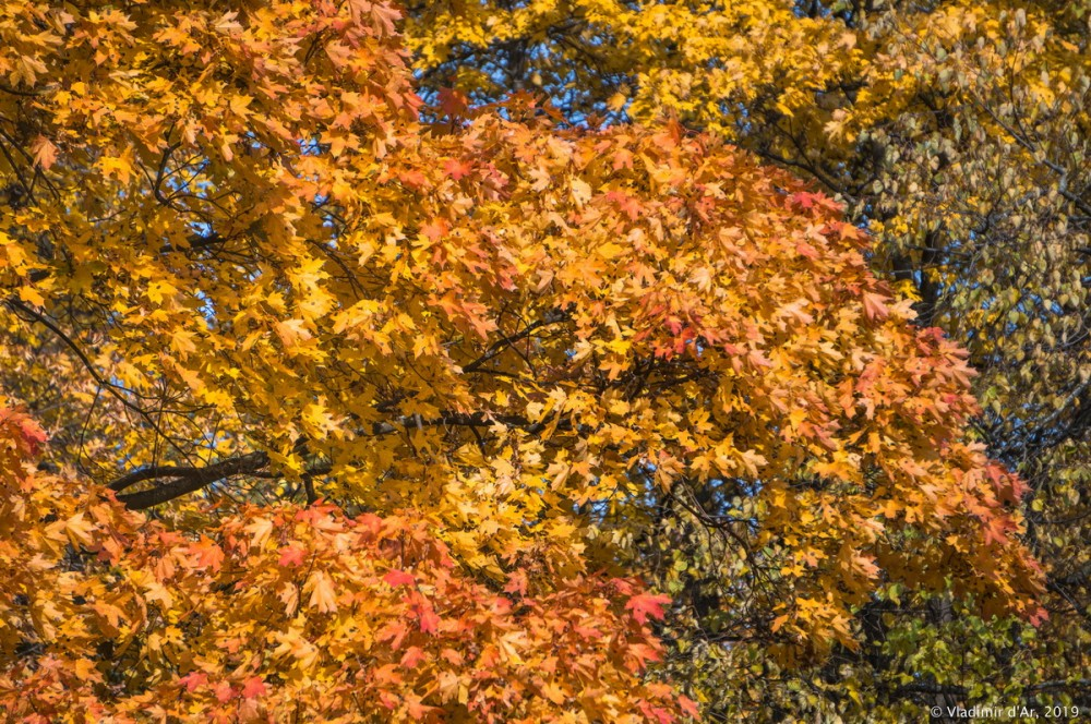 Царицыно - золотая осень 2019 - 035.jpg