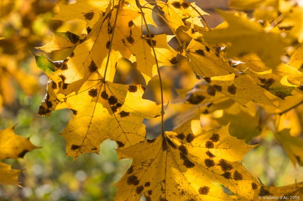 Царицыно - золотая осень 2019 - 041.jpg