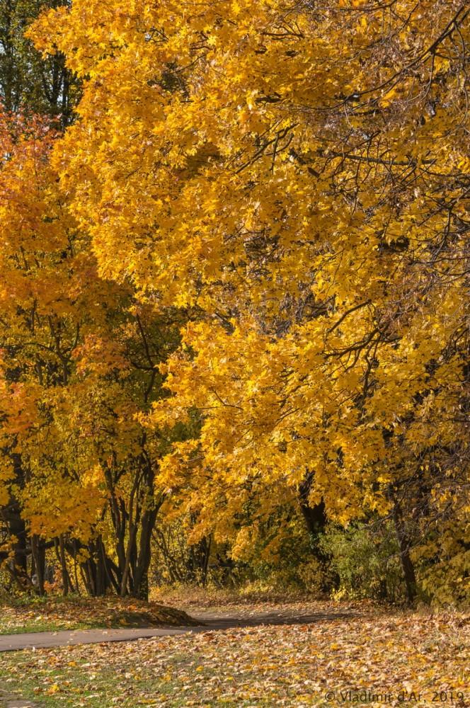 Царицыно - золотая осень 2019 - 042.jpg