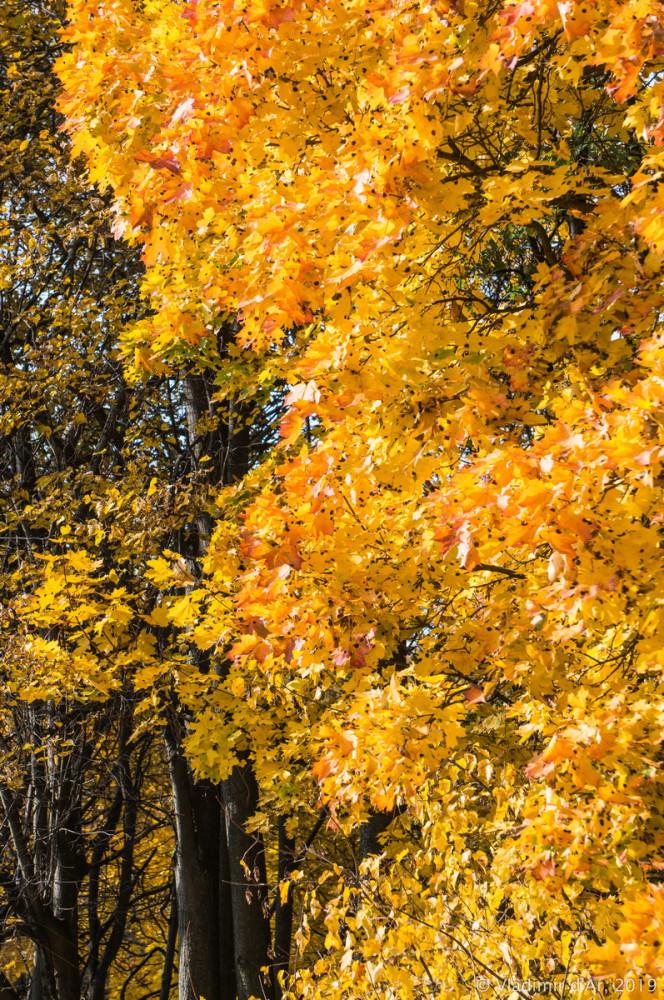 Царицыно - золотая осень 2019 - 044.jpg