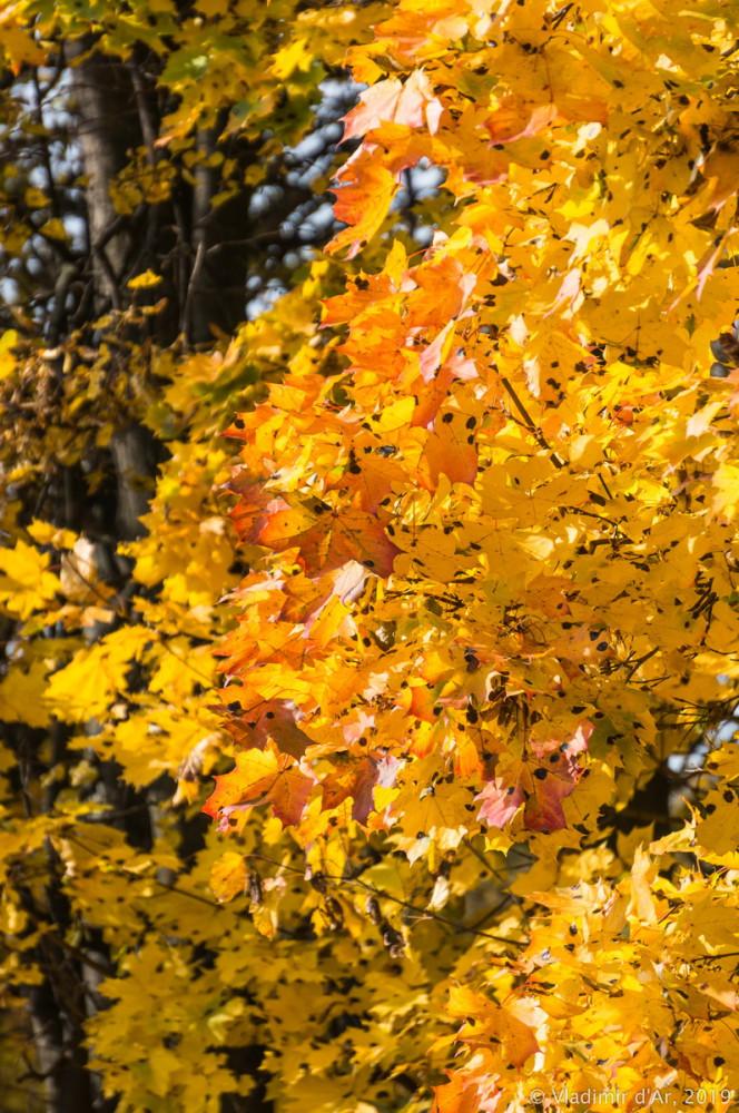 Царицыно - золотая осень 2019 - 045.jpg