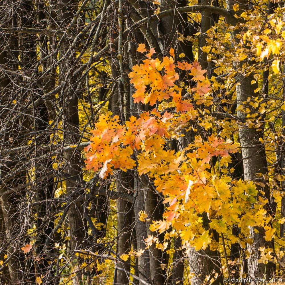 Царицыно - золотая осень 2019 - 046.jpg