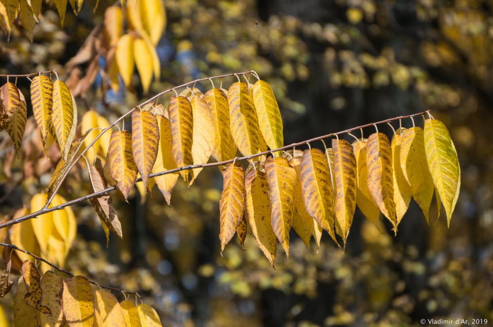 Царицыно - золотая осень 2019 - 053.jpg