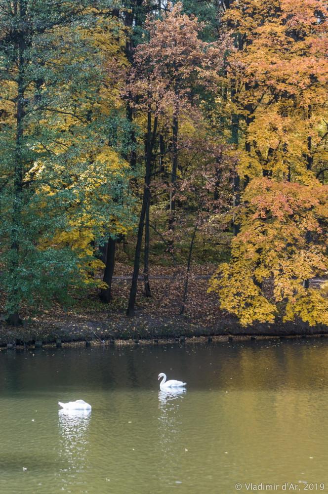 Царицыно - золотая осень 2019 - 074.jpg