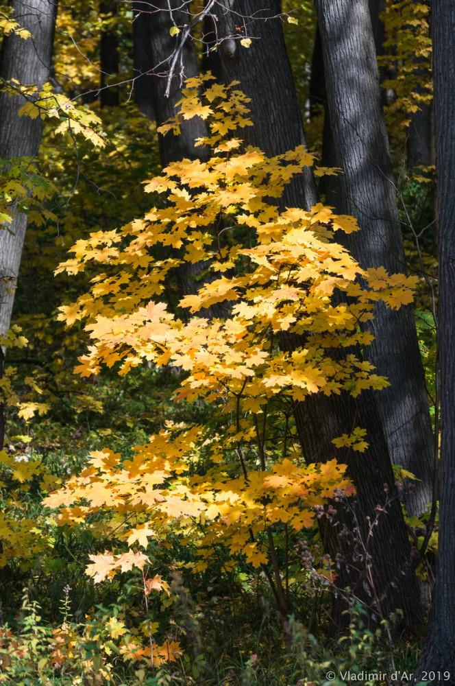 Царицыно - золотая осень 2019 - 078.jpg