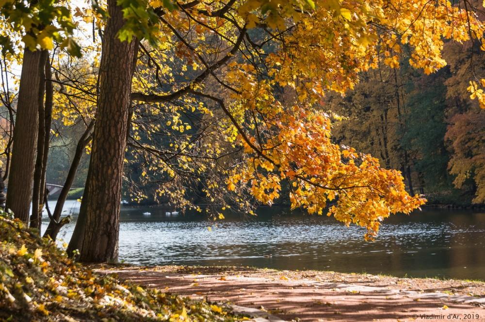 Царицыно - золотая осень 2019 - 091.jpg