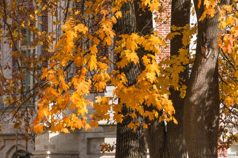 Царицыно - золотая осень 2019 - 126.jpg