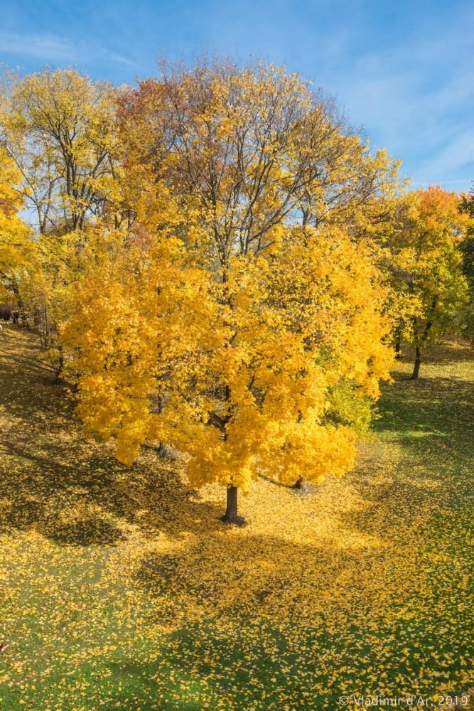 Царицыно - золотая осень 2019 - 130.jpg