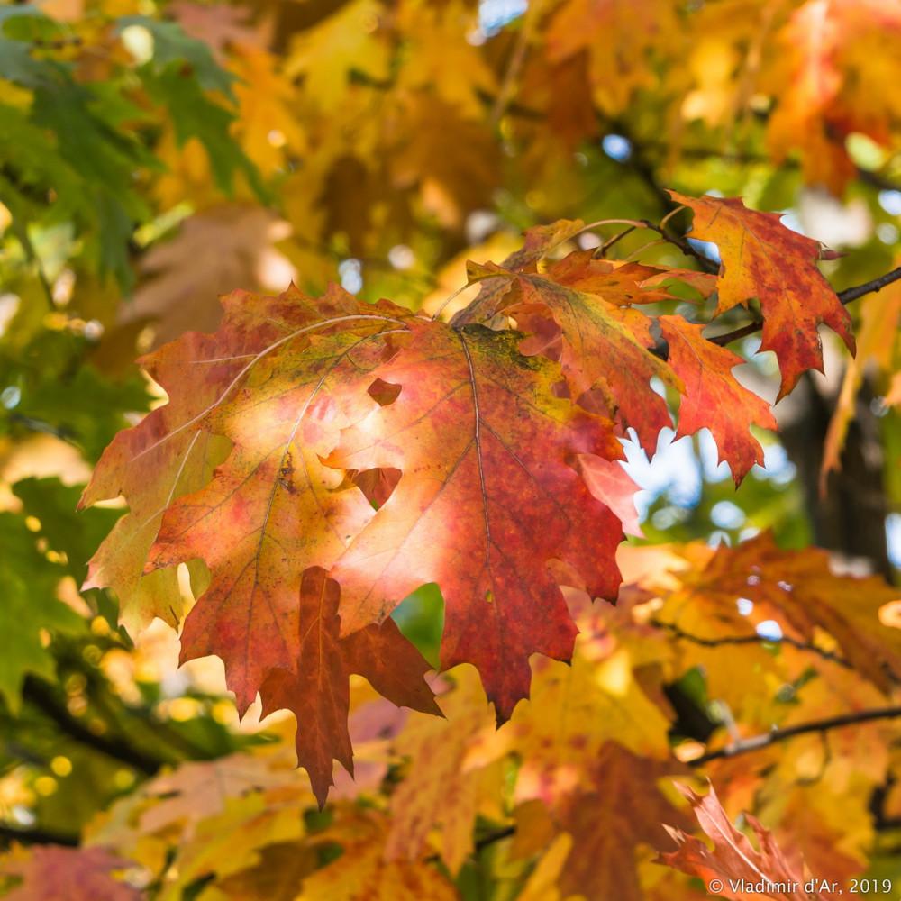 Царицыно - золотая осень 2019 - 136.jpg