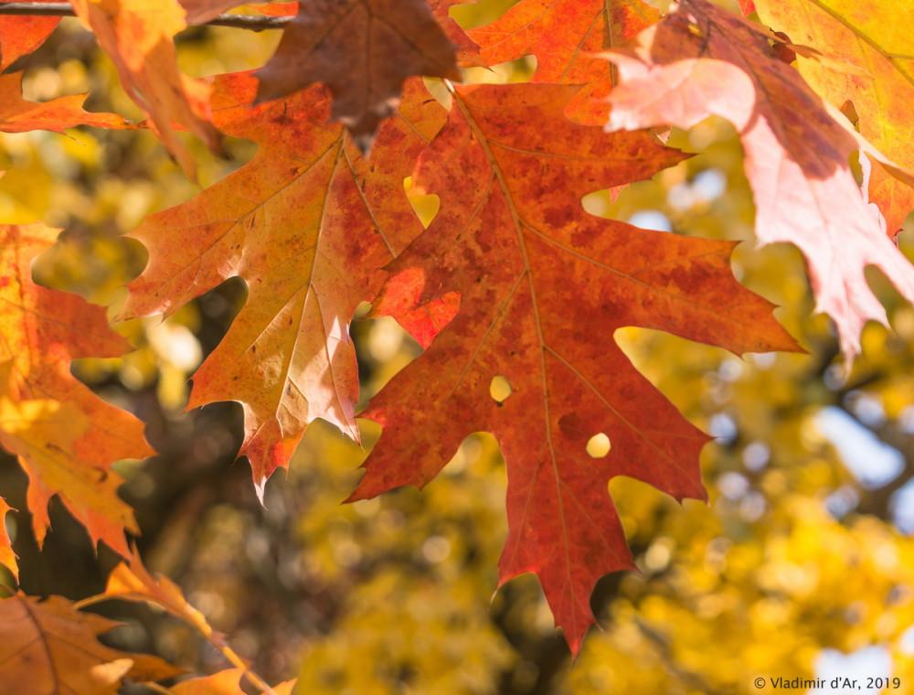 Царицыно - золотая осень 2019 - 139.jpg