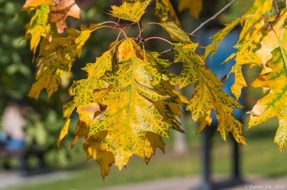 Царицыно - золотая осень 2019 - 143.jpg